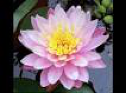 Webinar: Lakshmi - Wohlstand und Glück - Ferneinweihung - Einzeltermin