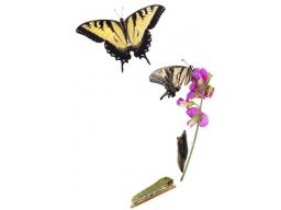 Webinar: Metamorphische Methode | von der Raupe zum Schmetterling (2 Schulungstermine!)
