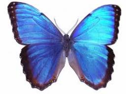 Webinar: Metamorphose - die sanfte Verwandlung