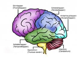 """Webinar: Einzel Coaching! """" Erfolg beginnt im Gehirn!"""""""