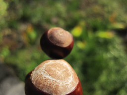 Webinar: Dein inneres Kind - Meditation