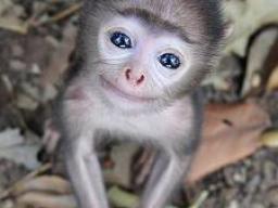 Webinar: Energetische Heilmethoden für Tiere