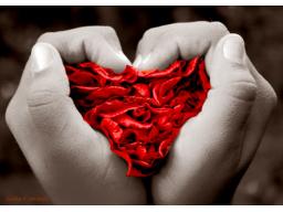 Webinar: Vergebungsritual Ho'o ponopono - Beziehungen heilen