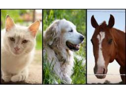 Webinar: Wirbelsäulenbegradigung für dein Tier