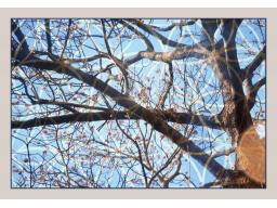 Webinar: Kennst du deinen Ahnen-/Stammbaum?