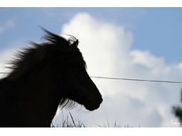 Webinar: Horses mirror Humans