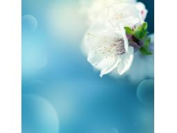 Webinar: Gruppenchanneling mit Raum für Fragen an die geistige Welt