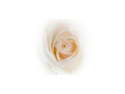 Webinar: Rosenmeditation