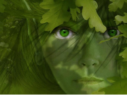 Webinar: Phantasiereise Gnarlwood,, im zauberhaften Wald`´