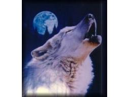 Webinar: Finde Dein Krafttier - eine spirituelle Trance
