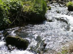 Webinar: Die Weisheit der Volkslieder (I): Vom Wasser lernen!