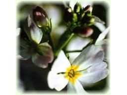 Webinar: Sorgen und Stress Adé mit Bachblüten