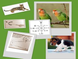 Webinar: Neue Homöopathie für Tiere- Alternative/Unterstützung auch ohne Pillen
