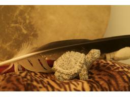 Webinar: Krafttierbegleitung 2014