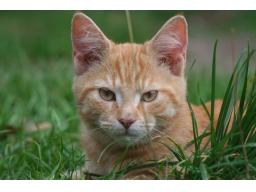 Webinar: Werde ein Tier - Meditation
