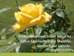 "Webinar: Atem-Meditation ""Das Wunder des Bewussten Atmens"""