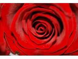 Webinar: Heilung des Herzens - Erzengel Chamuel * Lady Rowena