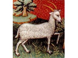 Webinar: Astrologie Februar 2014 - Steinbock
