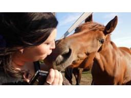 Webinar: Tierheilung + Heilsitzung für ihre Tiere