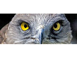 Webinar: Kurzworkshop Tierkommunikation im Alltag