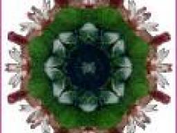 Webinar: Lebe Dein Dharma