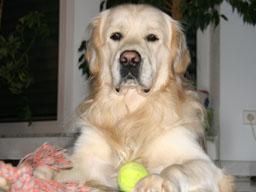 Webinar: Heilungskreis für unsere besten Freunde die Tiere
