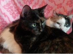 Webinar: Wirbelsäulenbegradigung für Dich und dein Tier