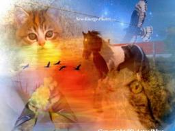 Webinar: KRAFTTIERE-IHRE SPIRITUELLE BEGLEITER