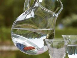 Webinar: (HEIL) STEINE In meinem Trinkwasser