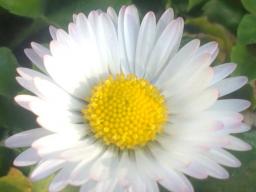 Webinar: Wege zur Fülle und zum Erfolg. Ein ganzheitlicher, spiritueller Ansatz
