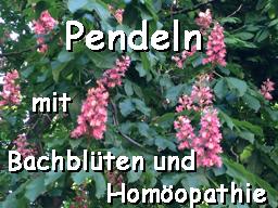 Webinar: Pendeln für Bachblüten und Homöopathie