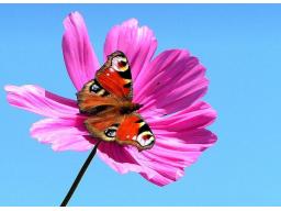 Webinar: Jahresserie Astromedizin-3-Zwillinge