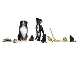 Webinar: Tierseelengespräch