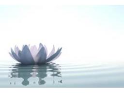 Webinar: Lektionen in Wundern Sessions - Finde deinen Frieden