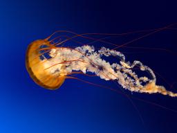 Webinar: Im Meer des Bewusstseins, 4