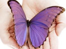 Webinar: Was bedeutet Transformation wirklich für DICH?