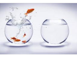 Webinar: Chance to Change - Chance auf Wandel