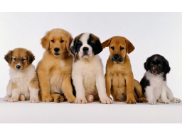 Webinar: Einführung in das Thema Tierkommunikation mit  Verlosung eines kostenlosen Tiergesprächs