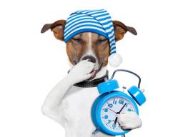 Webinar: Deine Schlaf-Meditation...
