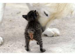 Webinar: Intensive Einzelbehandlung für dein Tier