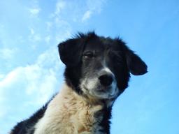Webinar: Feuerwerk, Gewitter und Sturm? Was tun bei geräuschempfindlichen Hunden