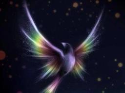 Webinar: Energieübertragung und Botschaften der geistigen Welt nur für dich - Kurzberatung - Einzeltermin