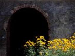 Webinar: Tunneln, das hyperluminare Coachingmodul