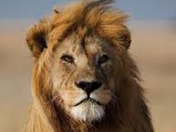Webinar: Jahresserie Astromedizin- Löwe