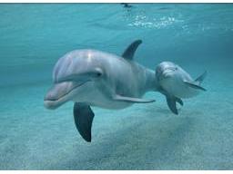 Webinar: Die Energie der Delfine und Wale - eine spirituelle Trancereise