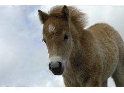Webinar: Versteht mein Tier mich? Sich Tieren mitteilen