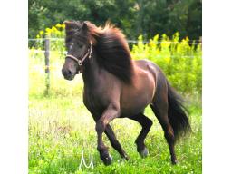 Webinar: Mit Pferden das Leben lernen ... Was dir Dein Pferd sagen will