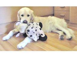 Webinar: Tierheilungskreis