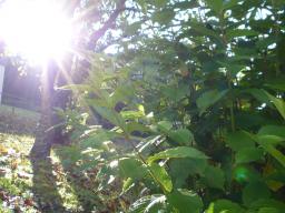 Webinar: Herzliebeslicht Meditation