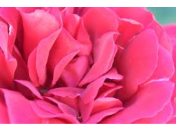 Webinar: ICH BIN ROSA